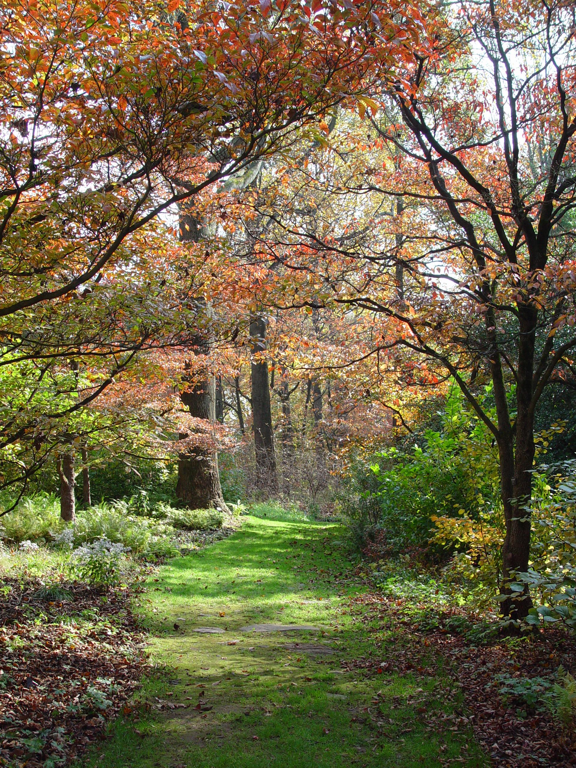 dogwood-path-in-fall