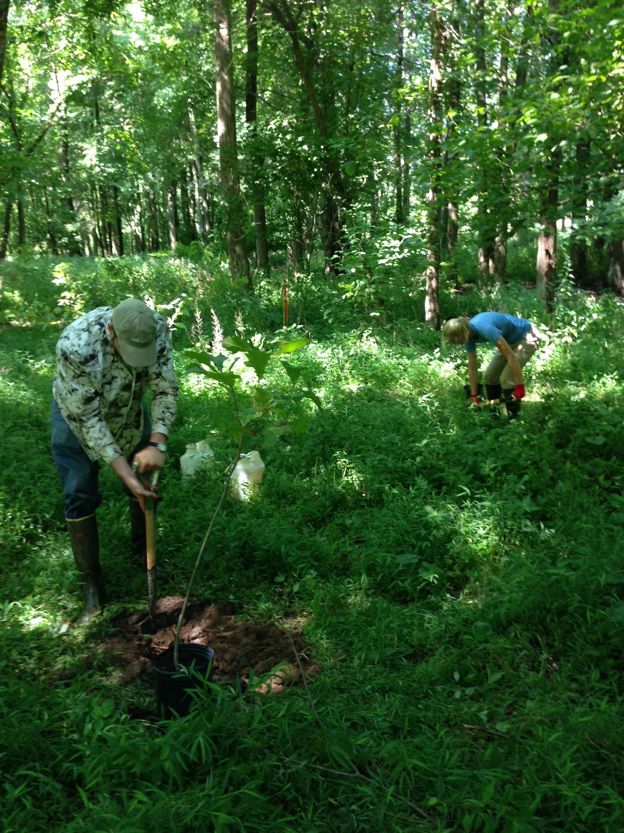 Planting the understory