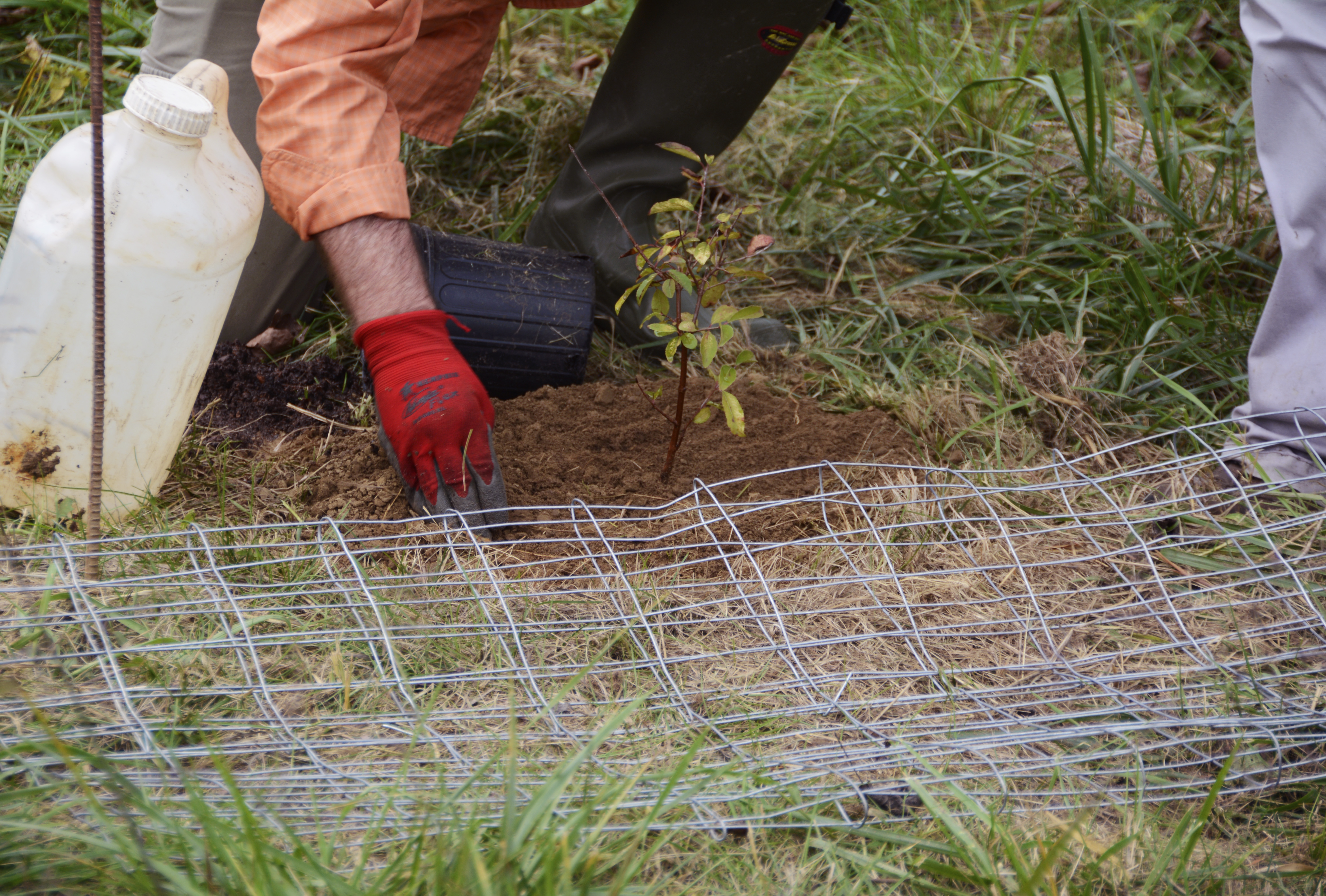 Tree planting in the Natural Lands
