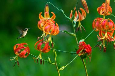 how to create a hummingbird garden