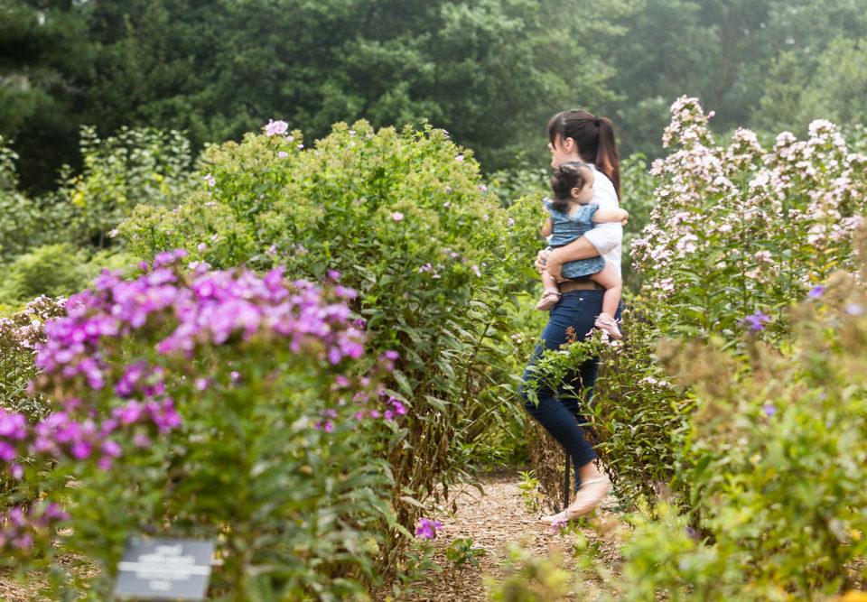 Exceptional Take A Virtual Tour Of The Gardens