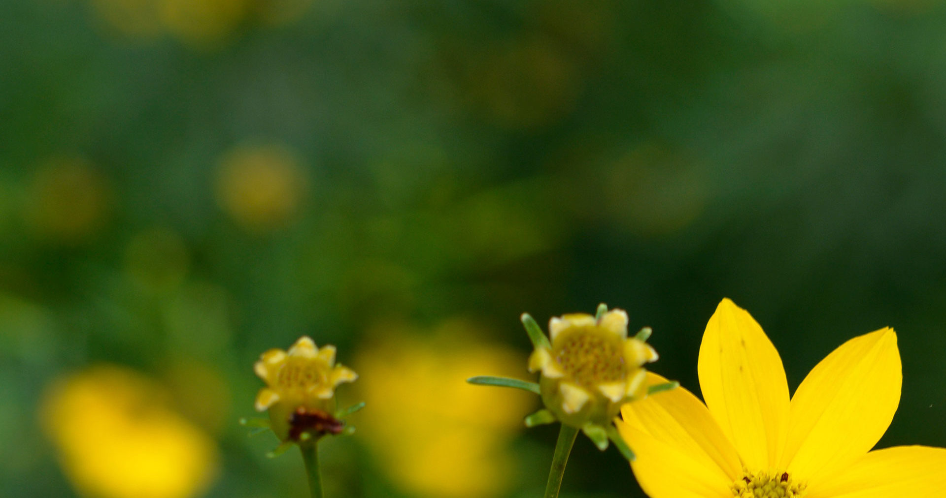 mt cuba center calendar of events