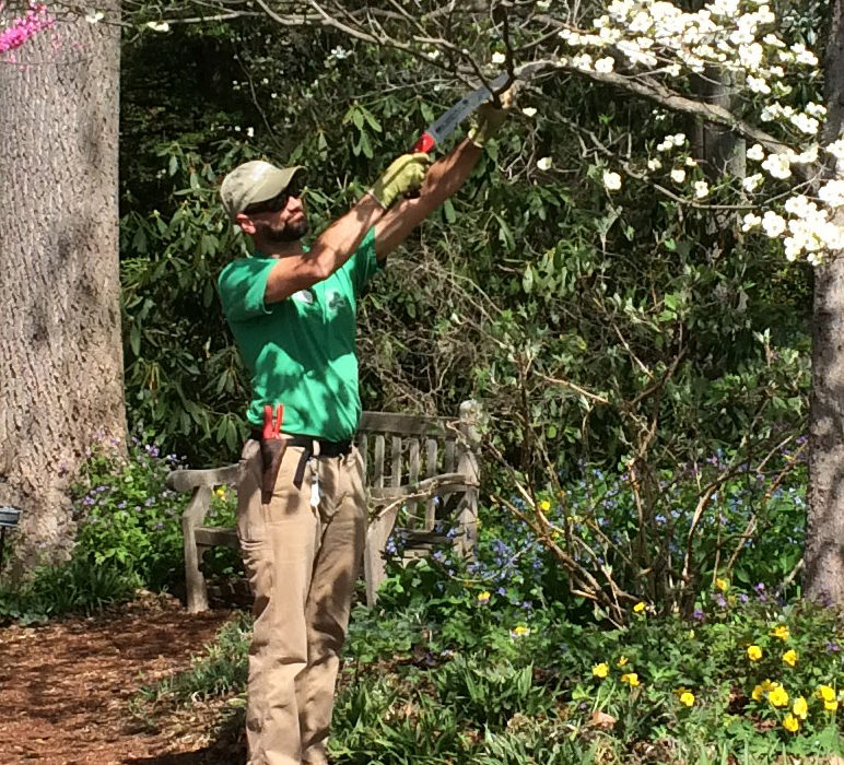 Pruning trees at Mt. Cuba Center.