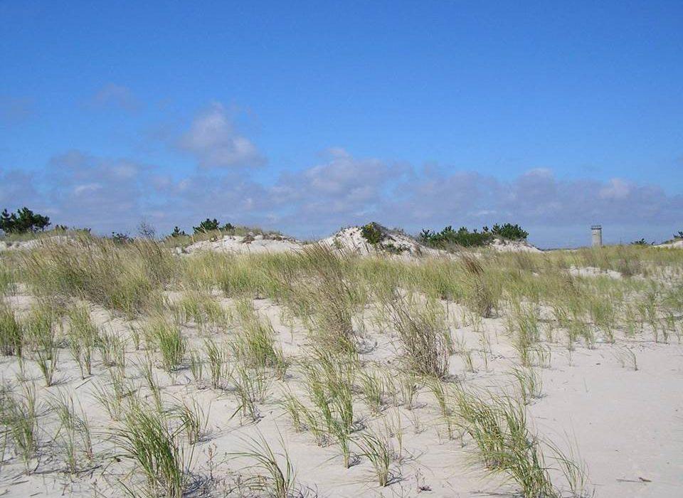 Coastal Plain Ecology Field Trip