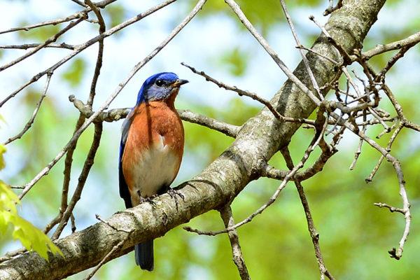 Bird at Mt. Cuba Center.