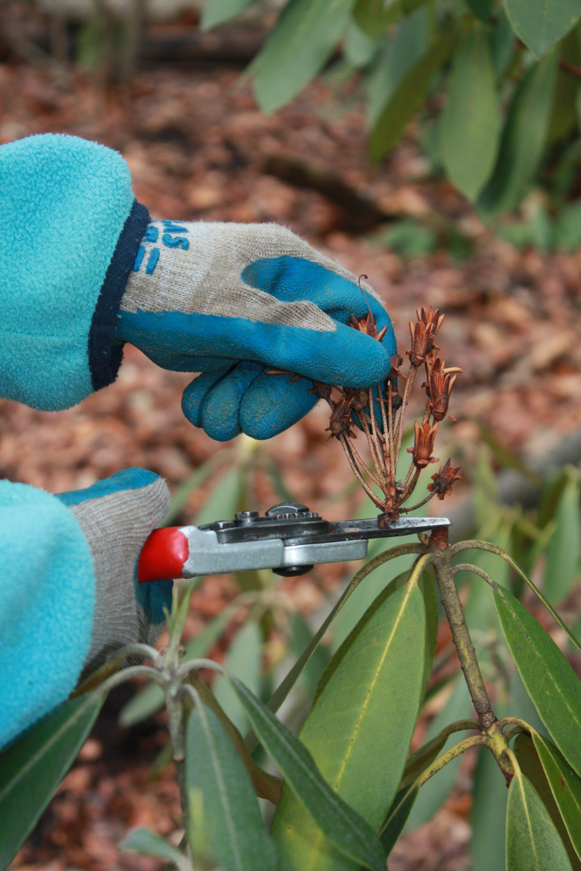 Pruning for homeowners.