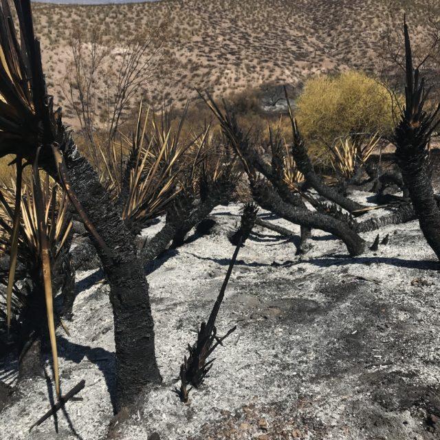 Burnt landscape from wildfires in dessert