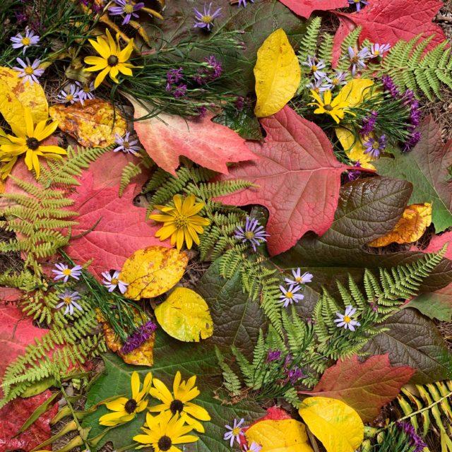 Autumn arrangement by Raymond Carter.