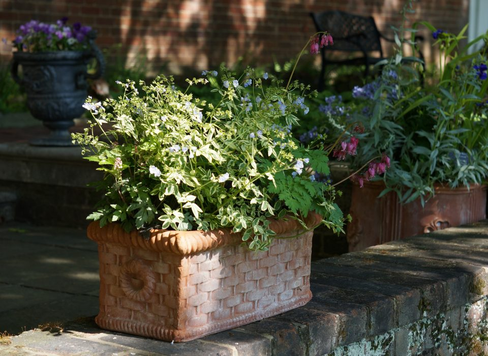 A beautiful fall container at Mt. Cuba Center.