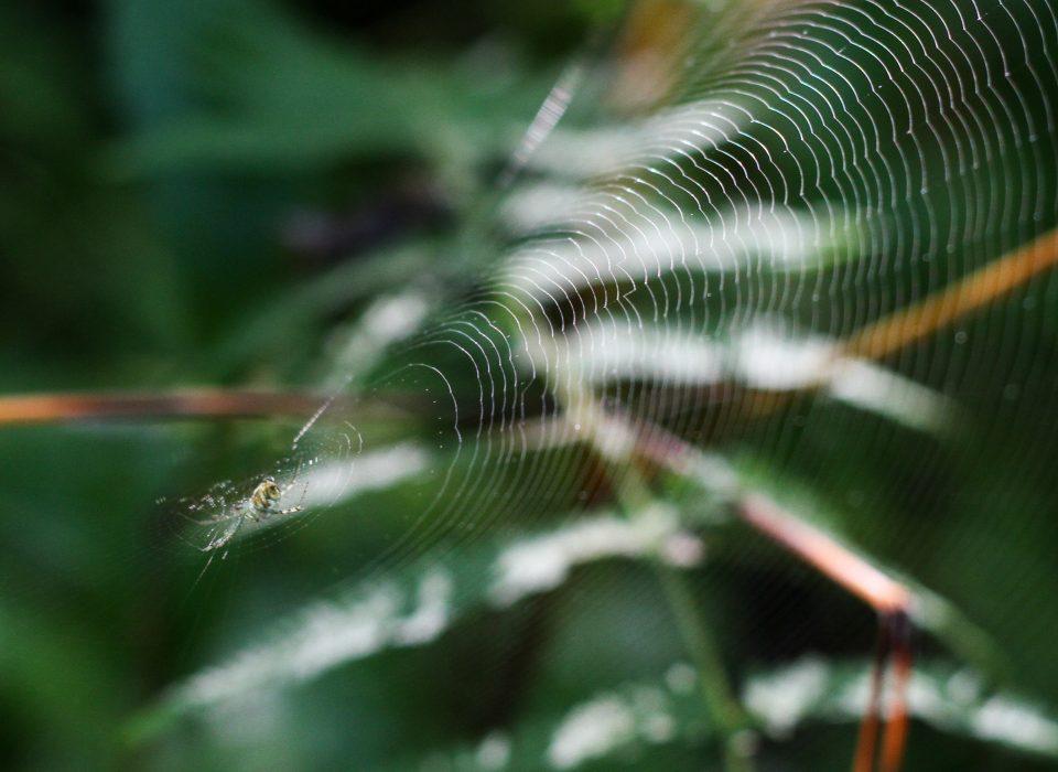A spider at Mt. Cuba Center.