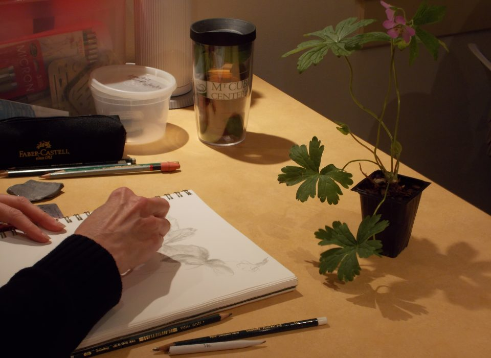 Graphite Botanical Art