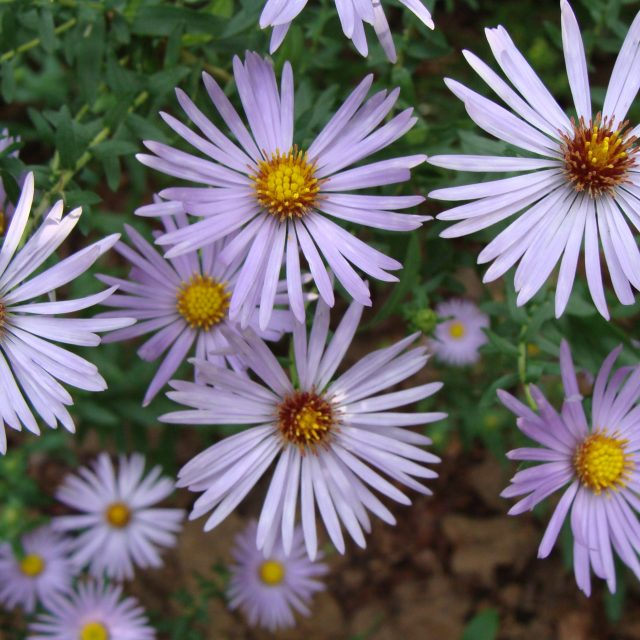 Top 10 Shade-Loving Perennials