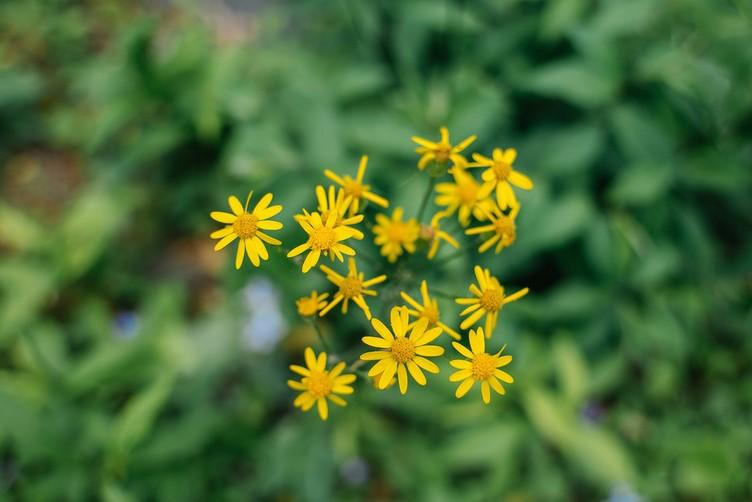 Underappreciated Native Plants.