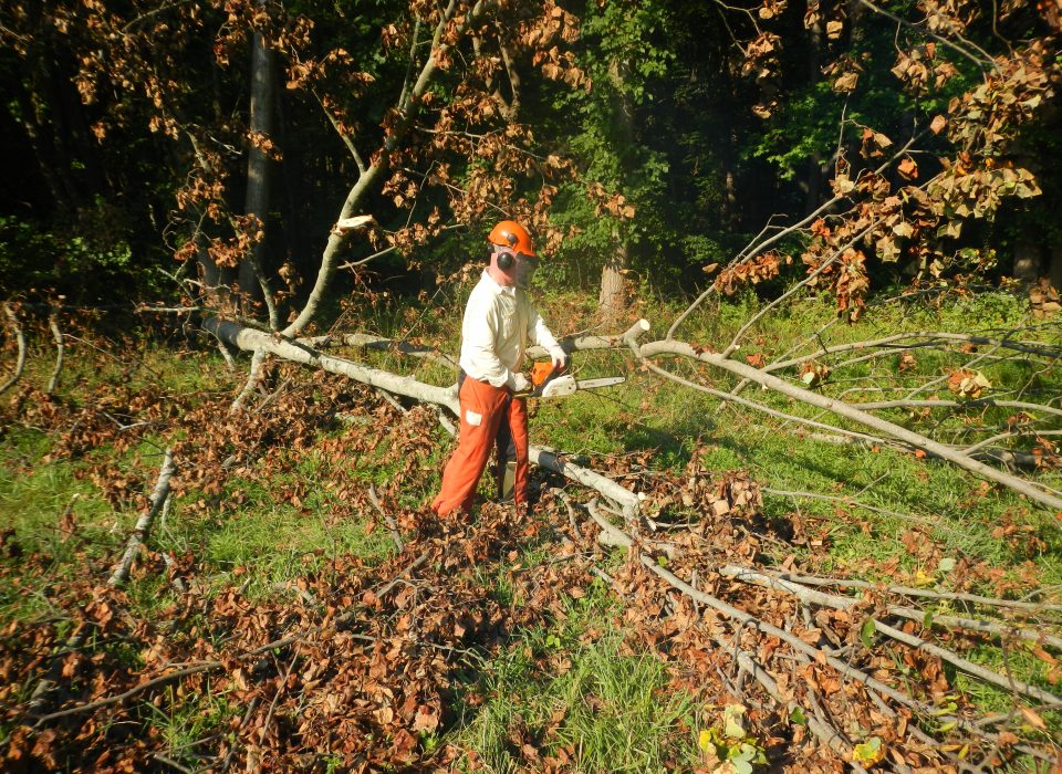 Chainsaws use and safety course