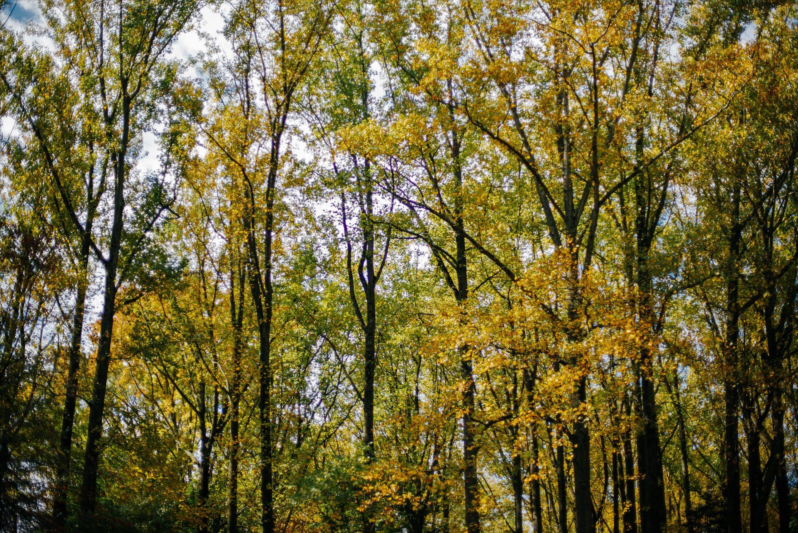 Mt. Cuba Center's woodlands in autumn