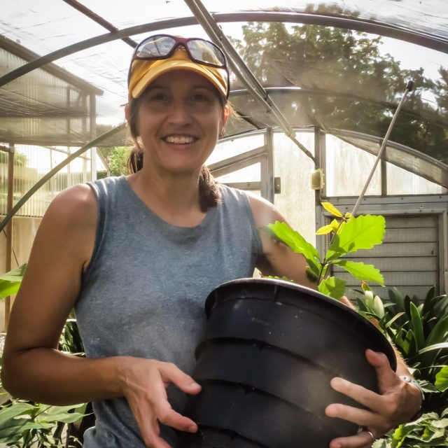 Shelby French in Greenhouse with potted American Chestnut