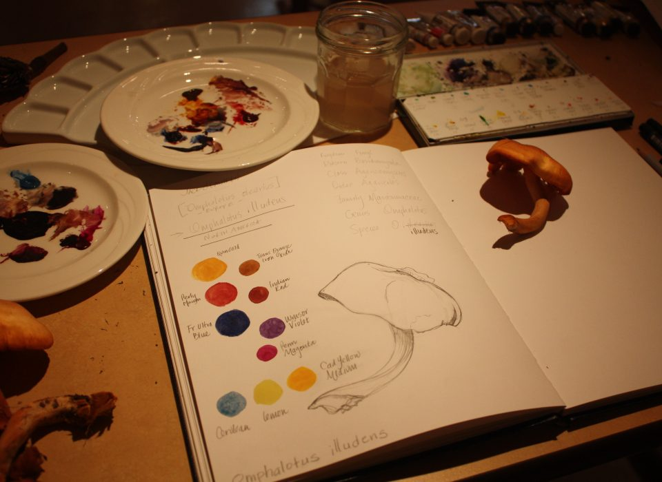 sketch of mushroom with paint color swatches on paper. art supplies surrounding pad of paper