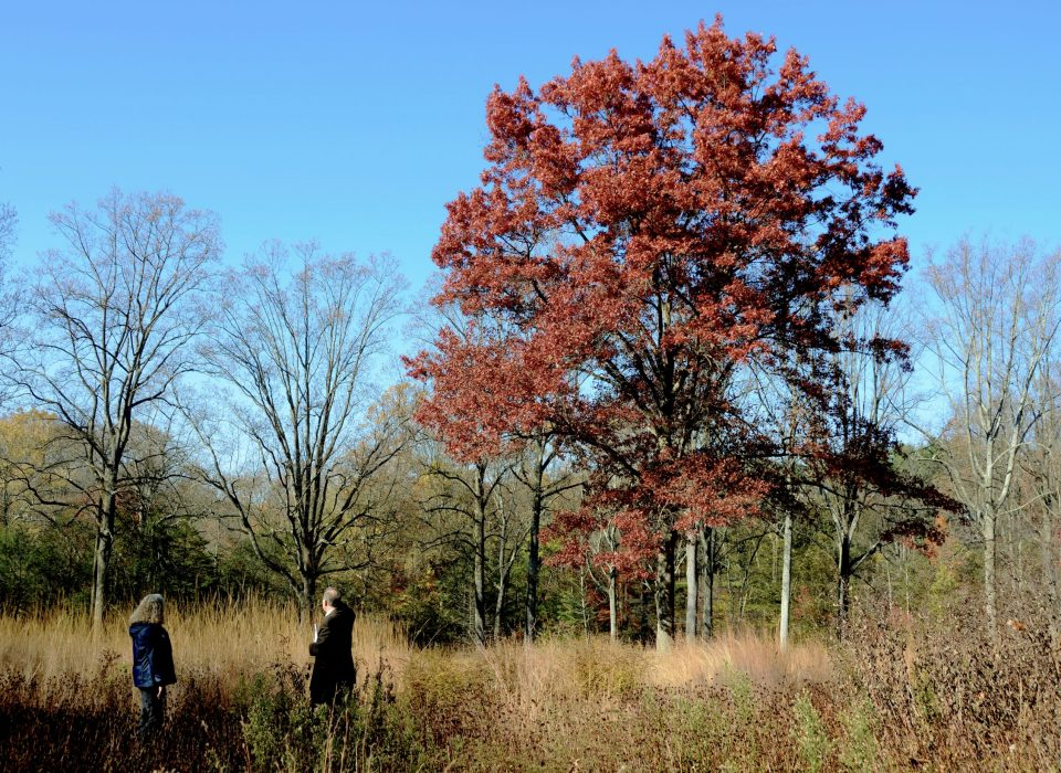 Brilliant red tree in autumn in Mt. Cuba's natural lands with people looking at the scenery in the foreground.