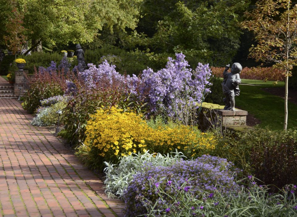 Picture of yellow and purple blooms in Mt. Cuba's formal garden