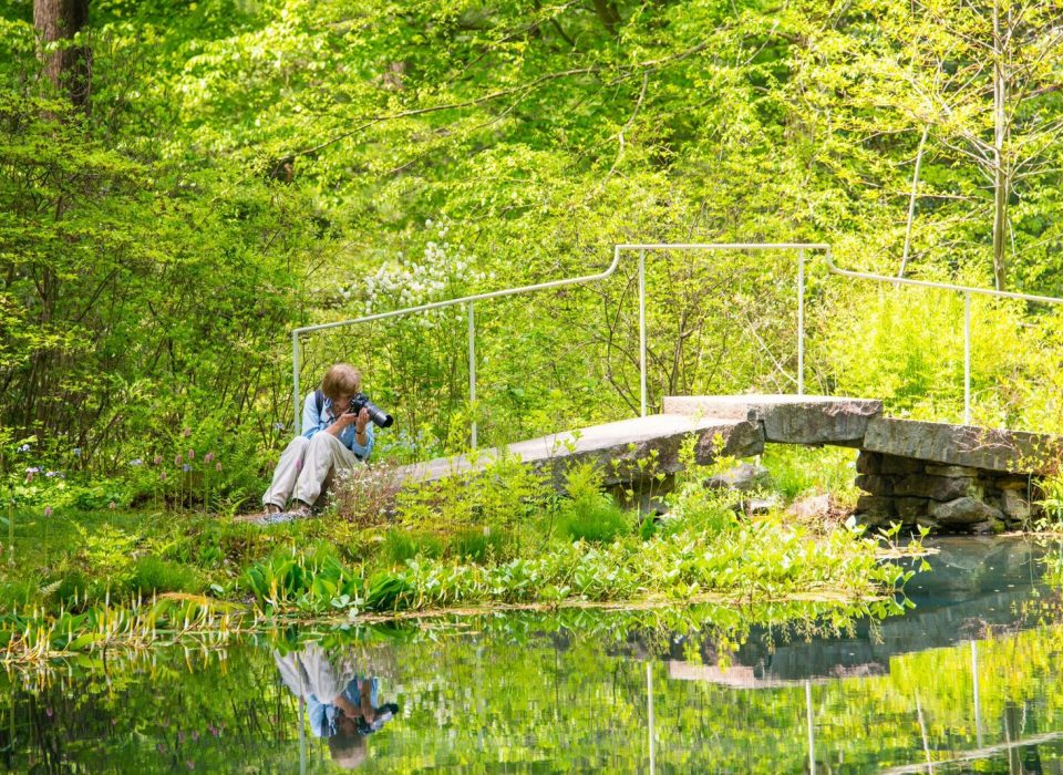 Woman takes photo of plants by a bridge at the pond