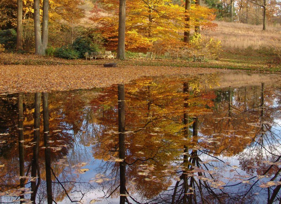 Autumn foliage reflects off the still pond.